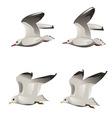 Flying Seagulls vector image