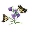 purple crocus flowers vector image vector image