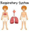 Respiratory system in boy vector image