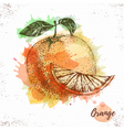 Watercolor orange sketch vector image