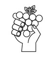 hand with grapes on white background vector image