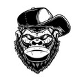 head gorilla had in baseball cap in vintage vector image