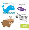 Letter W X Y Z Whale X-ray fish Yak Zebra Zoo vector image vector image