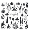 seaweeds silhouettes underwater coral reef hand vector image