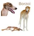 sighthound dog vector image
