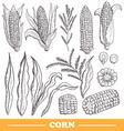 hand drawn corns set vector image