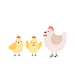 adorable hen and chicks isolated on white vector image