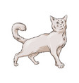 cute white cat pet animal hand drawn vector image