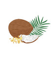 detailed botanical drawing coconut palm tree vector image