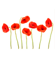 Nature background with red poppies vector image vector image