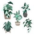 set five variegated house plants in pots vector image