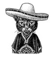 cat dressed in poncho sombrero vintage black vector image