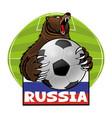 bear with a soccer ball vector image vector image