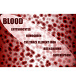 blood erithrocytes background vector image vector image