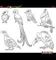 cartoon birds animal characters set coloring book vector image