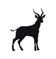 black silhouette african gazelle vector image vector image
