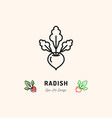 radish icon vegetables logo thin line art design vector image vector image