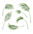 realistic detailed 3d green tropical palm tree set vector image