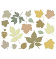 silhouettes different leaves vector image vector image