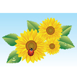 sunflowers and ladybird vector image