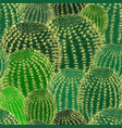 cactus plants texture seamless pattern background vector image