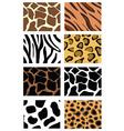 animal print patterns vector image