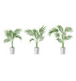 realistic detailed 3d potted green tropical palm vector image vector image