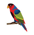 western black capped lory parrot in flat vector image vector image