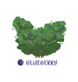 blueberry berry bush with name vector image