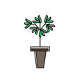 green office plant in pot isolated icon vector image