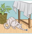 cute white cat pet animal playng with a ball room vector image
