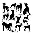 italian greyhound dog animal silhouettes vector image vector image
