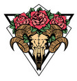 rose tattoo with skull a sheep with sacred vector image vector image