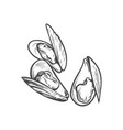 sketch cartoon sea mussel isolated vector image vector image