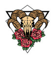 rose tattoo with skull of a sheep with sacred vector image vector image