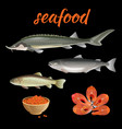 seafood set vector image vector image