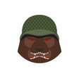 angry bear in military helmet aggressive grizzly vector image vector image