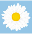 chamomile flower top view isolated on blue vector image vector image