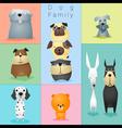 set dog family 3 vector image