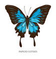 set hand drawn colored papilio ulysses vector image vector image
