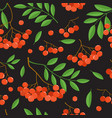 branch of ashberries isolated on black seamless vector image