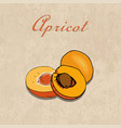 hand drawn apricots on a craft paper vector image