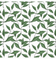 pattern with green leaves isolated on white vector image vector image