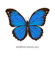 set hand drawn colored morpho menelaus vector image