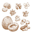 sketch icons of nuts grain and seeds vector image vector image