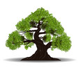 big tree vector image vector image