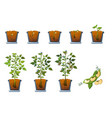 Soy beans seed sprout in pot icons set flat style