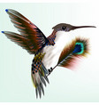 colorful hummingbird with peacock feather vector image