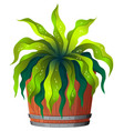 a green plant in pot vector image vector image