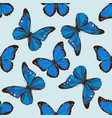 seamless pattern with hand drawn colored morpho vector image